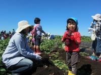 2011芋掘り体験☆本日(9/23)開始☆