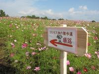牧場のコスモス2011開花状況☆~その3~