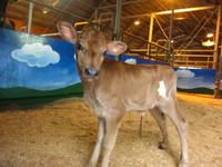 牛の赤ちゃんの名前が決まりましたよ~♪
