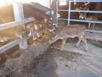 ジャージー種の子牛が産まれました!